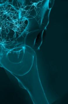Foto Neuropelveologie Nervenbahnen