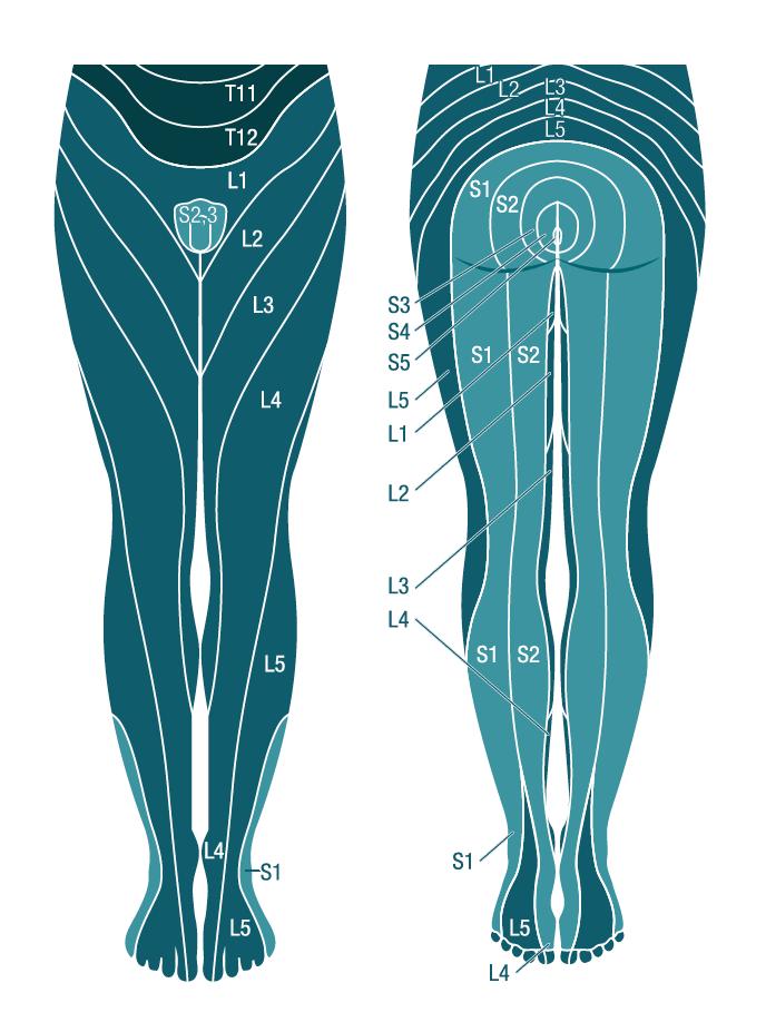 Grafik Dermatome